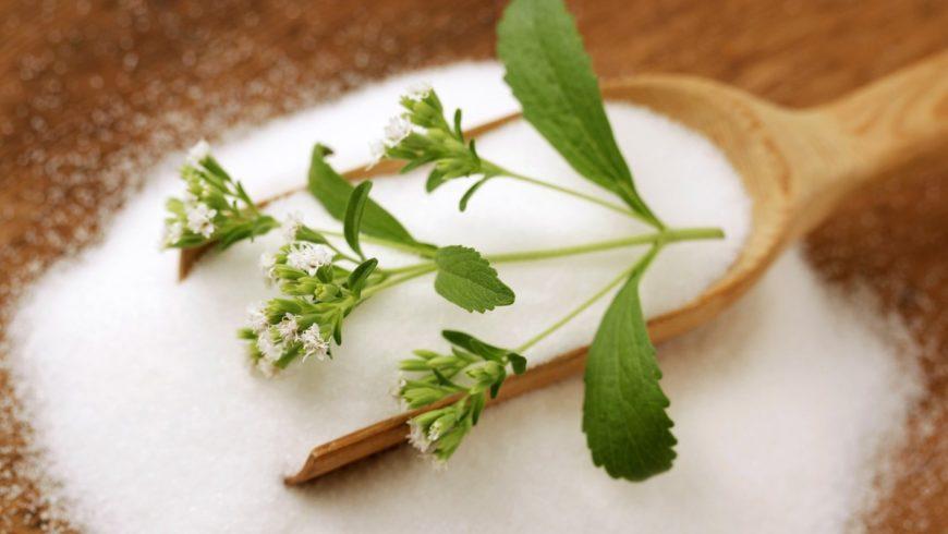 Стевия - что это польза и вред медовой травы применение
